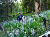 In the Gallatin National Forest with Kris Hill, herbalist and friend from SWSBM days, and her dog Aster.