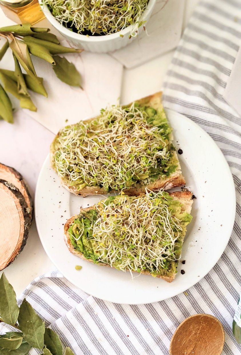 healthy sprout avocado toast with alfalfa sprouts recipe home grown sprouts recipes for breakfast or lunch easy crunchy avocado toast recipes with diy alfalfa sprouts grow your own in your kitchen