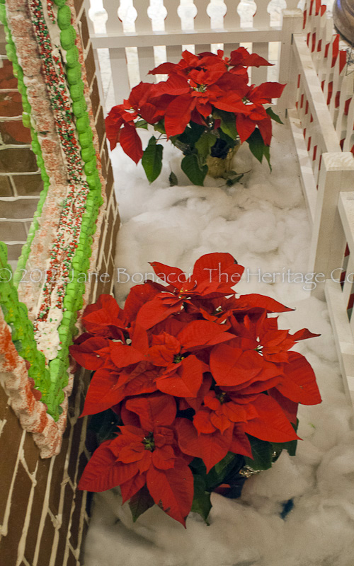 "Poinsettias in the ""snow"""