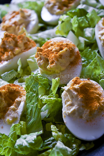 Deviled Eggs sprinkled with paprika and nestled in a bed of shredded lettuce
