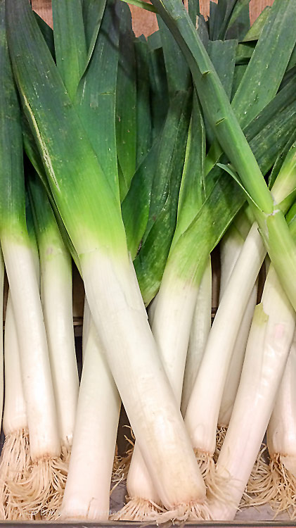 The difference between French & American leeks; French Potato Leek Soup from my Paris Kitchen 2017 Jane Bonacci, The Heritage Cook
