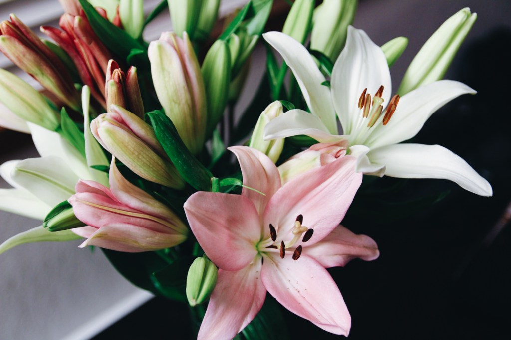 Lily Flower arrangement from the Bouqs Co
