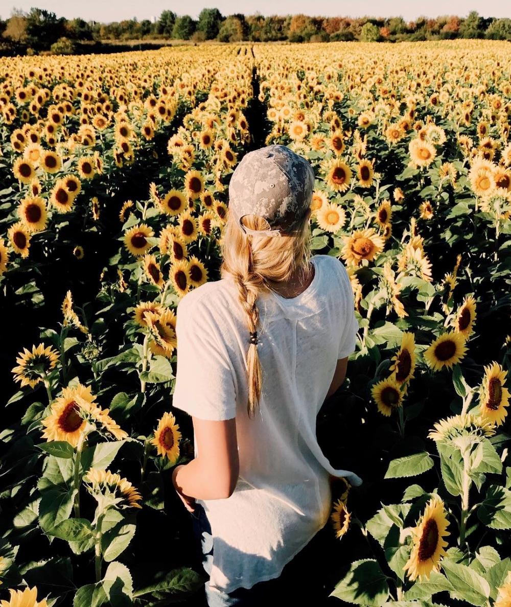 Best Sunflower Fields for Shooting
