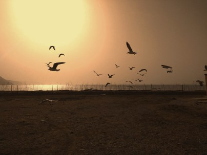 Birds flying at Mansarovar