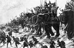 Elephants At The Battle Of Zama