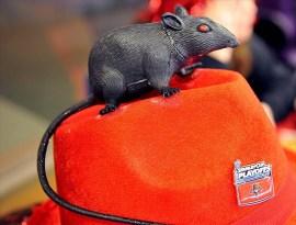 Florida Panthers Rat on Hat