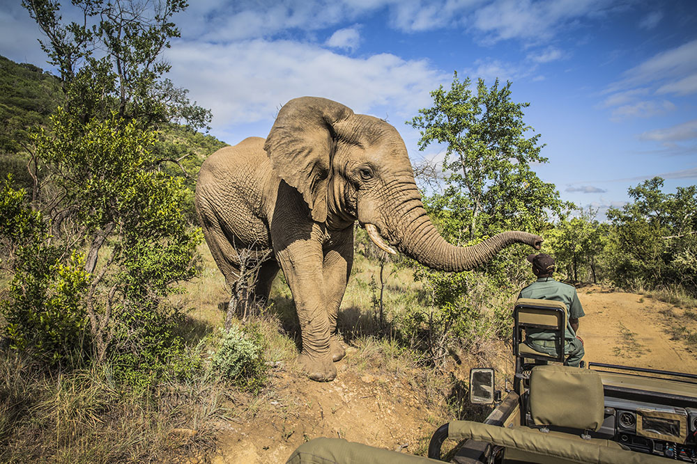 Up close and personal with an elephant on a South Africa Big Five safari