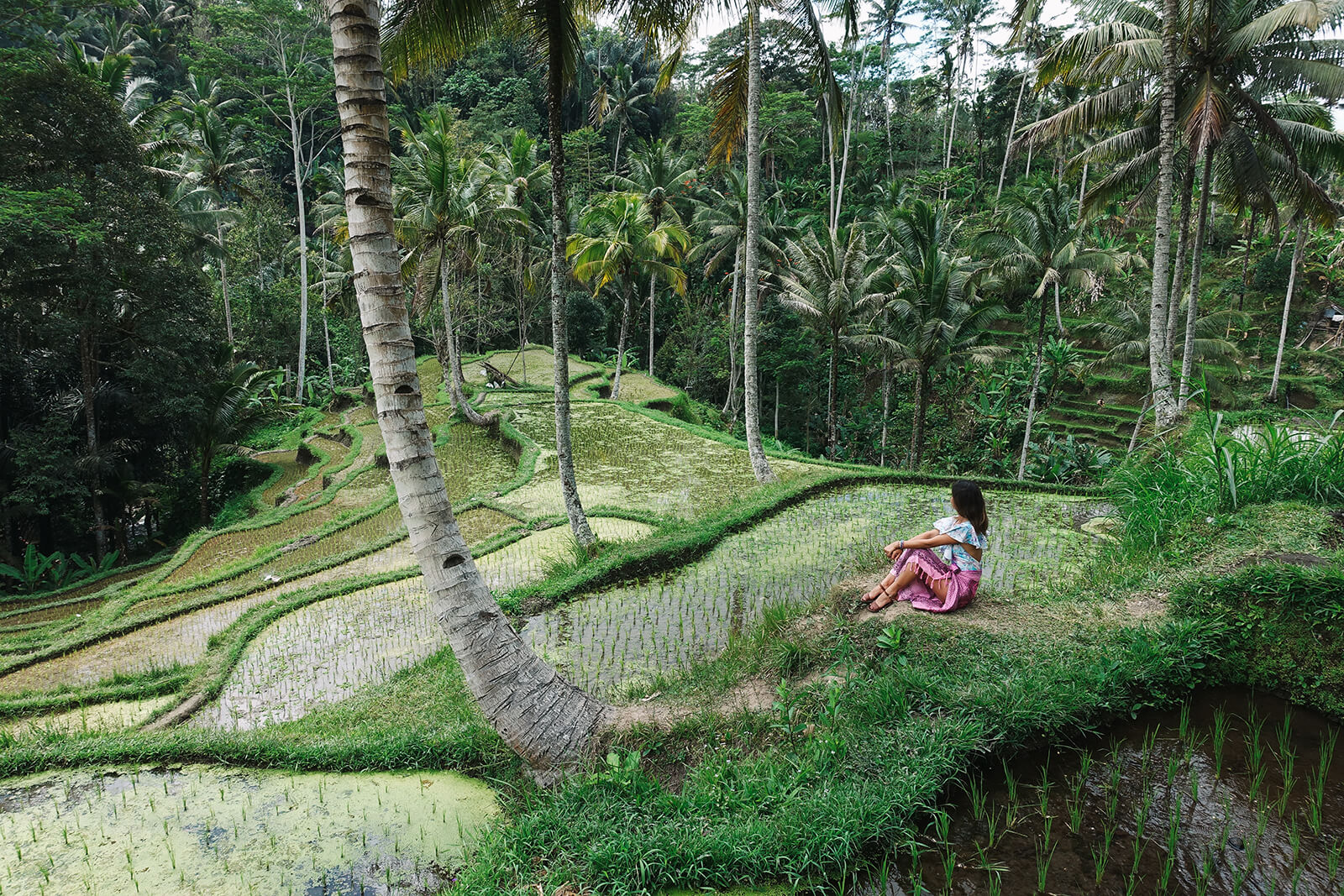 Beautiful rice terraces of Asia