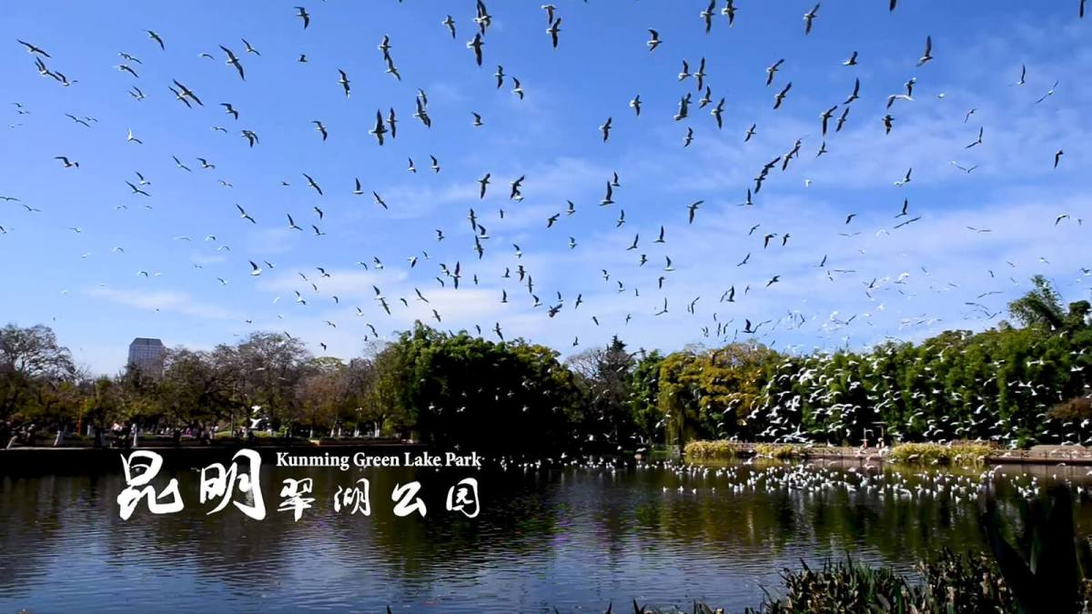 Kunming Green Lake Park is one of the must visit destinations in Yunnan, China