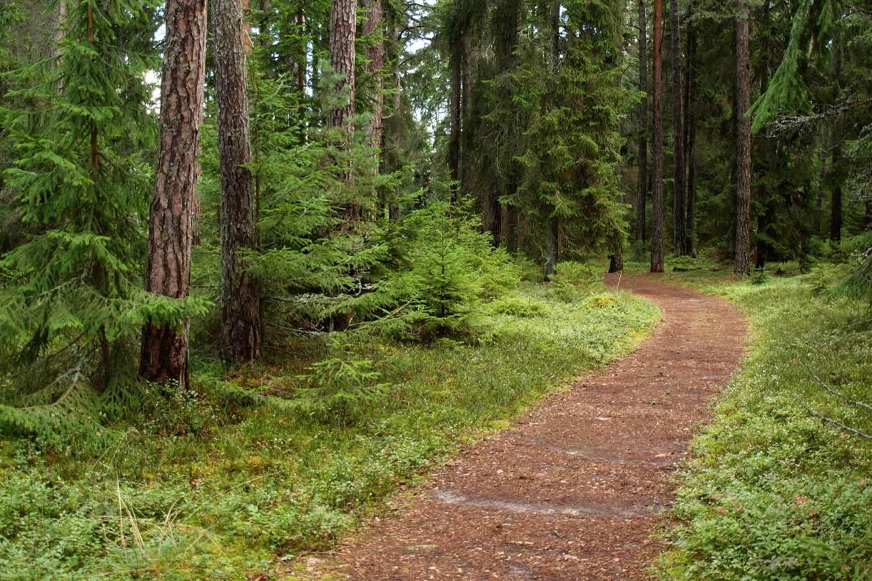 Walking down a path through the forest on Aegna Island, off the coast of Tallinn, Estonia