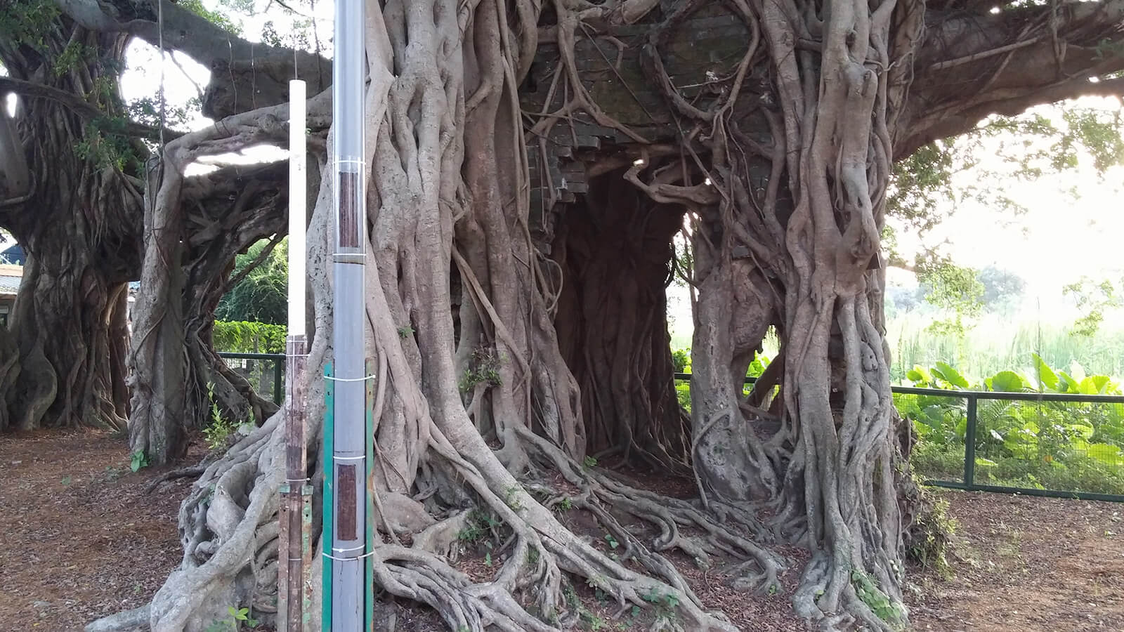 Kam Tin Tree House in Shui Tau, one of the interesting and off the beaten path Hong Kong activities for your travel to-do list