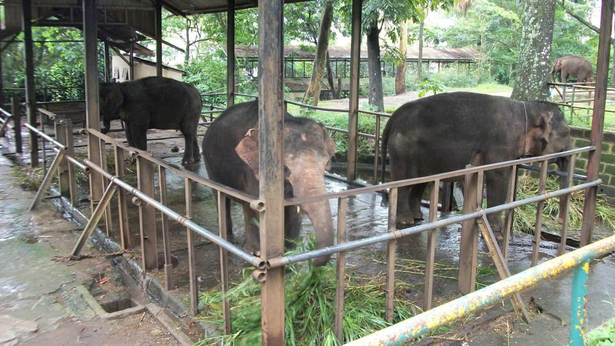 Elephants at Kebun Binatang Bandung Zoo