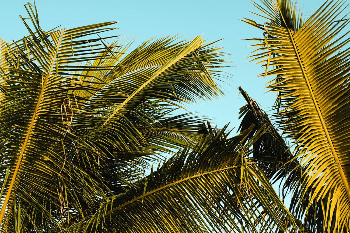 Palm trees and blue skies at Seven Mile Beach in Negril, Jamaica