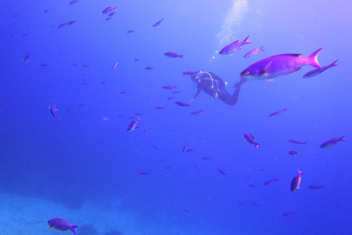 Scuba diving in Port Antonio, Jamaica