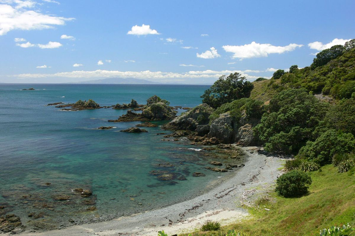 Tiritiri Matangi Island is one of the overlooked, offbeat Auckland activities the HoliDaze recommends