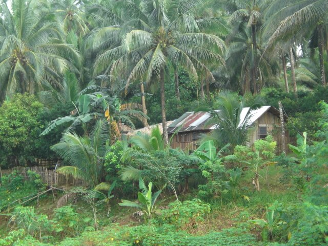 Hut in the Philippines jungle