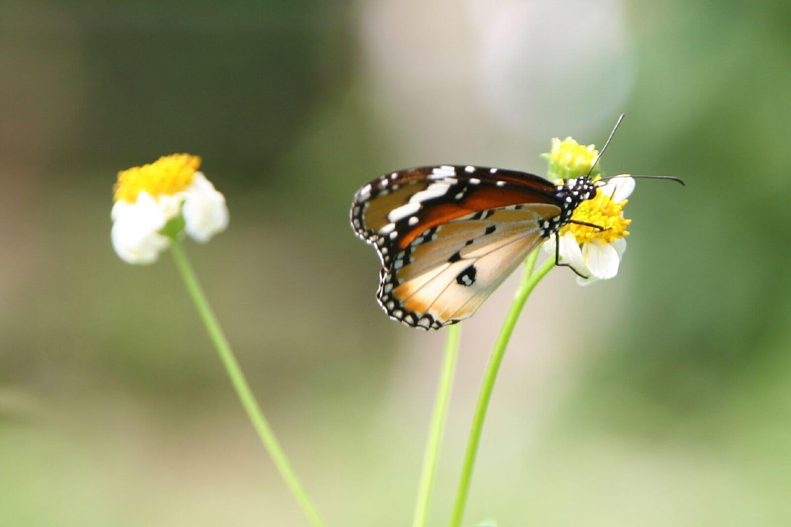 Get out and explore the countryside of Kranji, one of the offbeat Singapore things to do -- its full of butterflies
