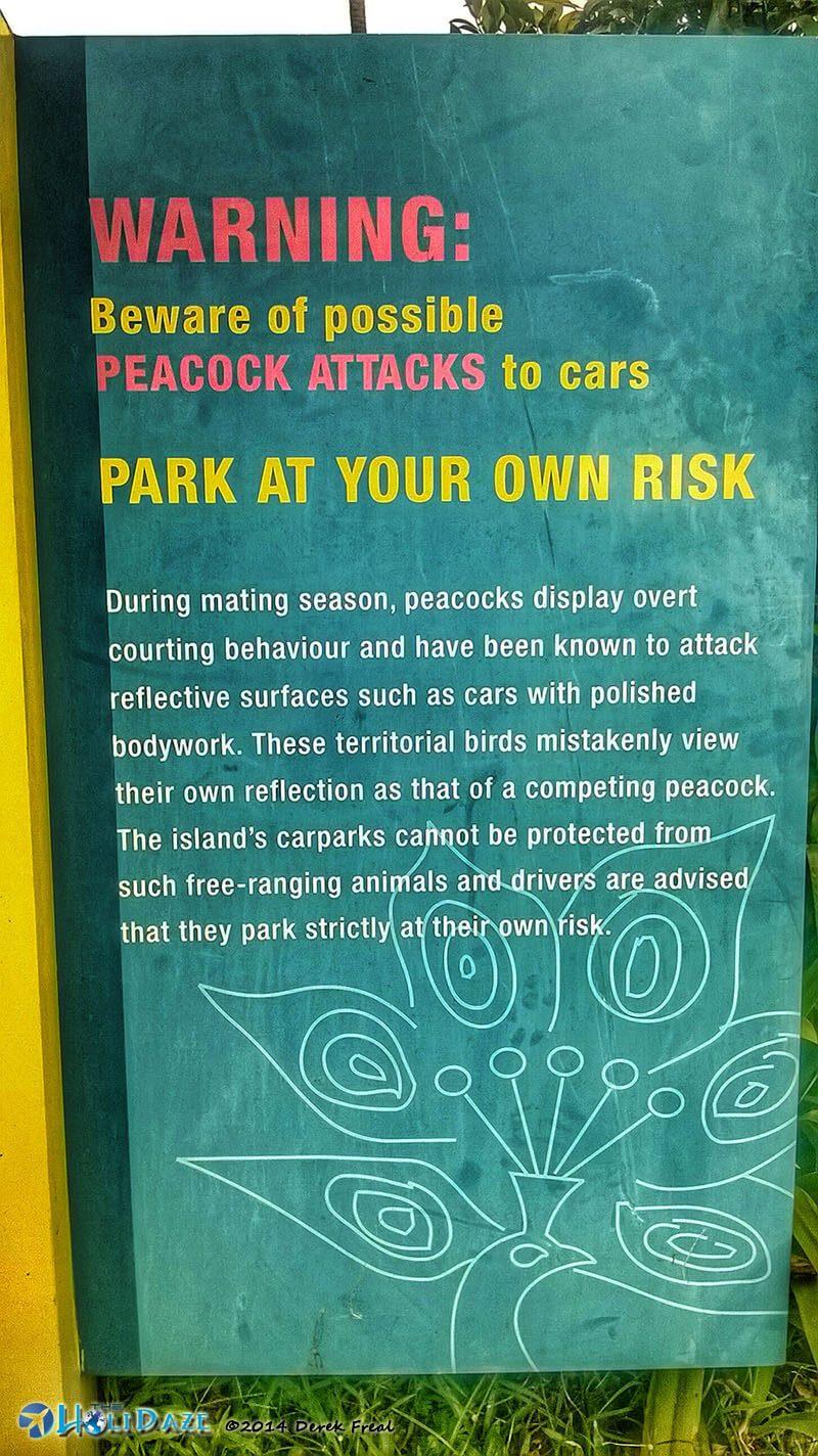 Warning: Beware Of Peacocks
