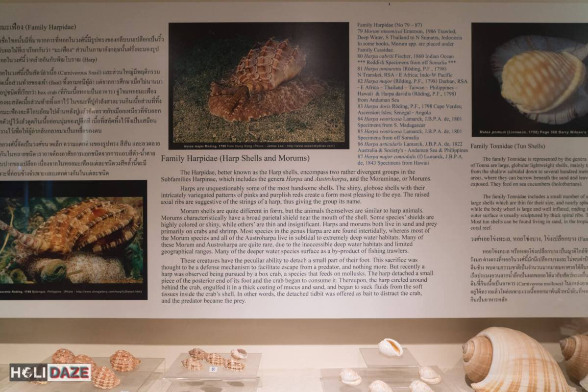 Exploring the Bangkok Seashell Museum in Thailand