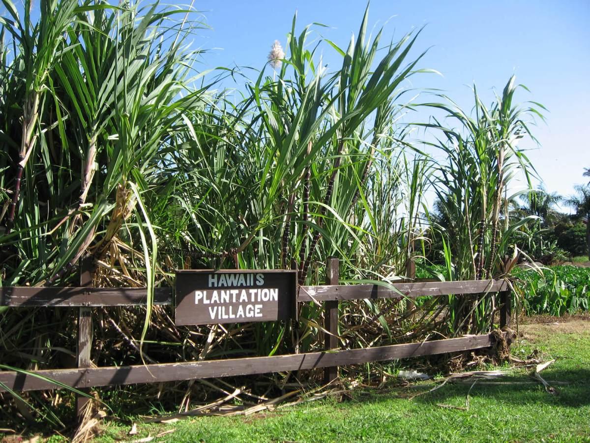 Hawaii Plantation Village on Oahu