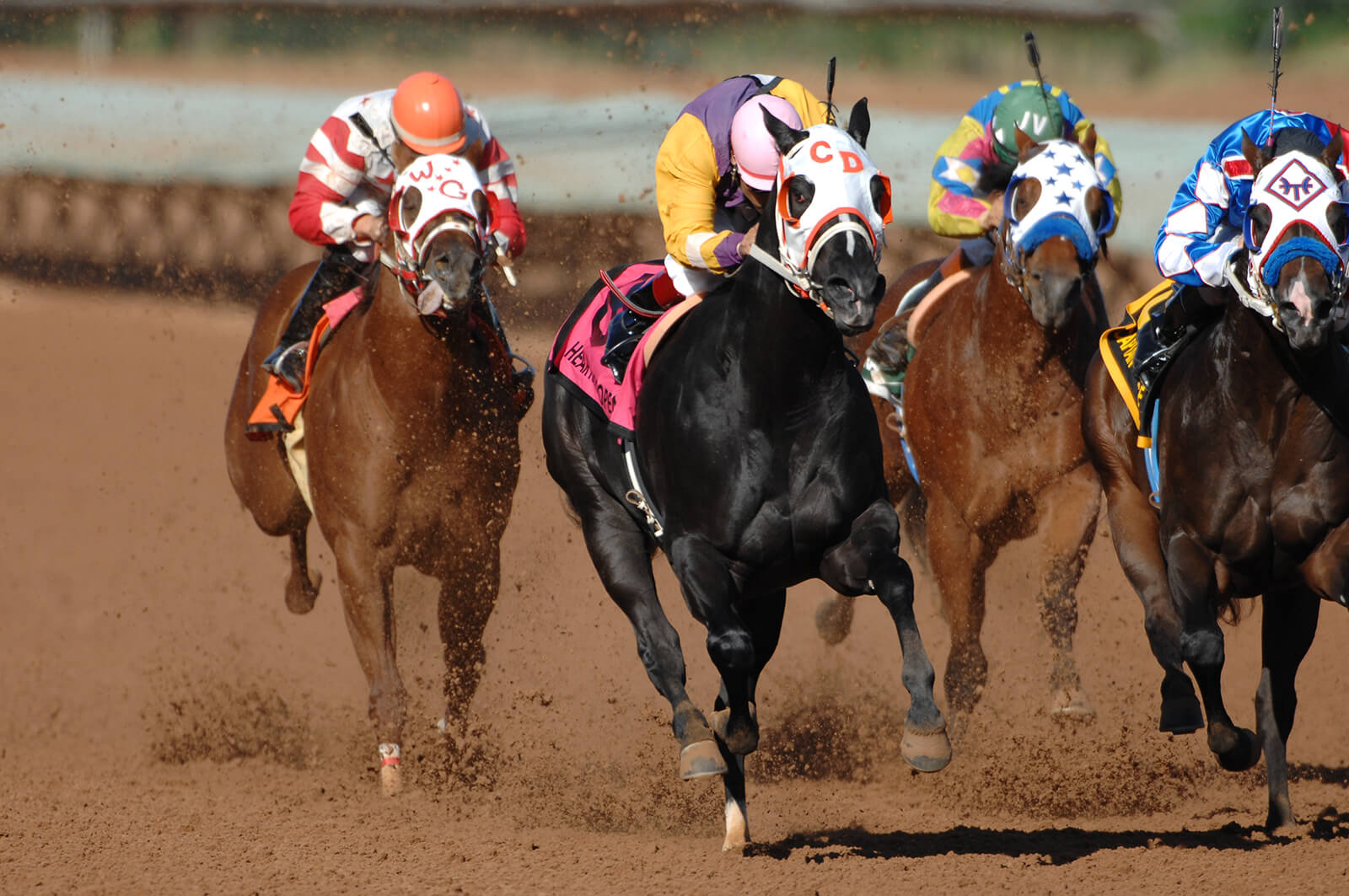 Horse racing at Ruidoso Downs in New Mexico