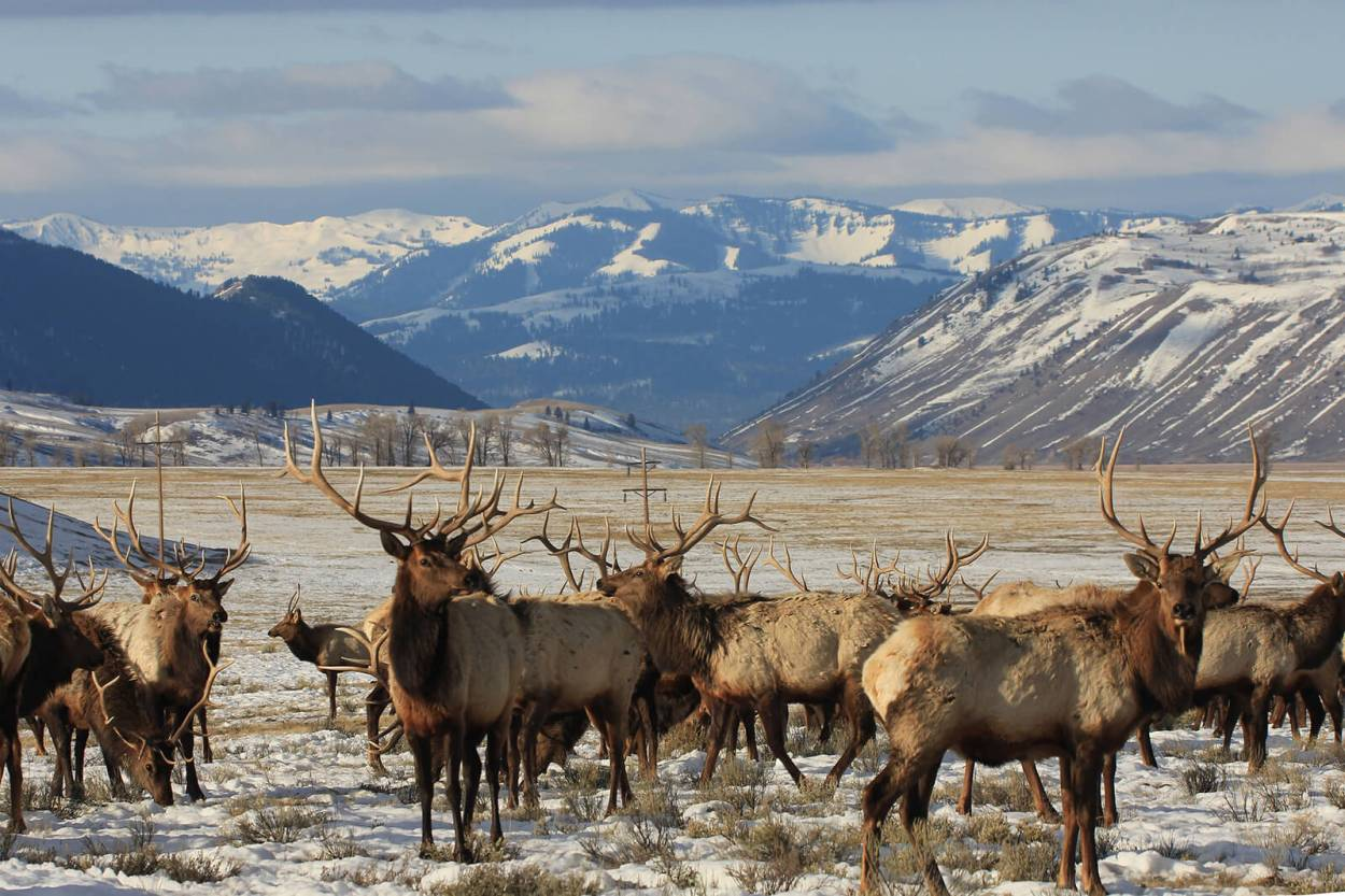 National Elk Refuge in Jackson, Wyoming