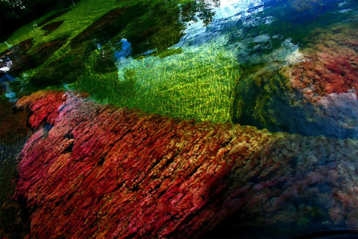 "Caño Cristales — Colombia's ""River of Five Colors"""