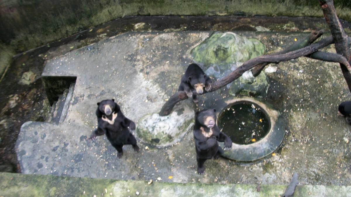 Kebun Binatang Bandung: The Most Depressing Zoo Ever?