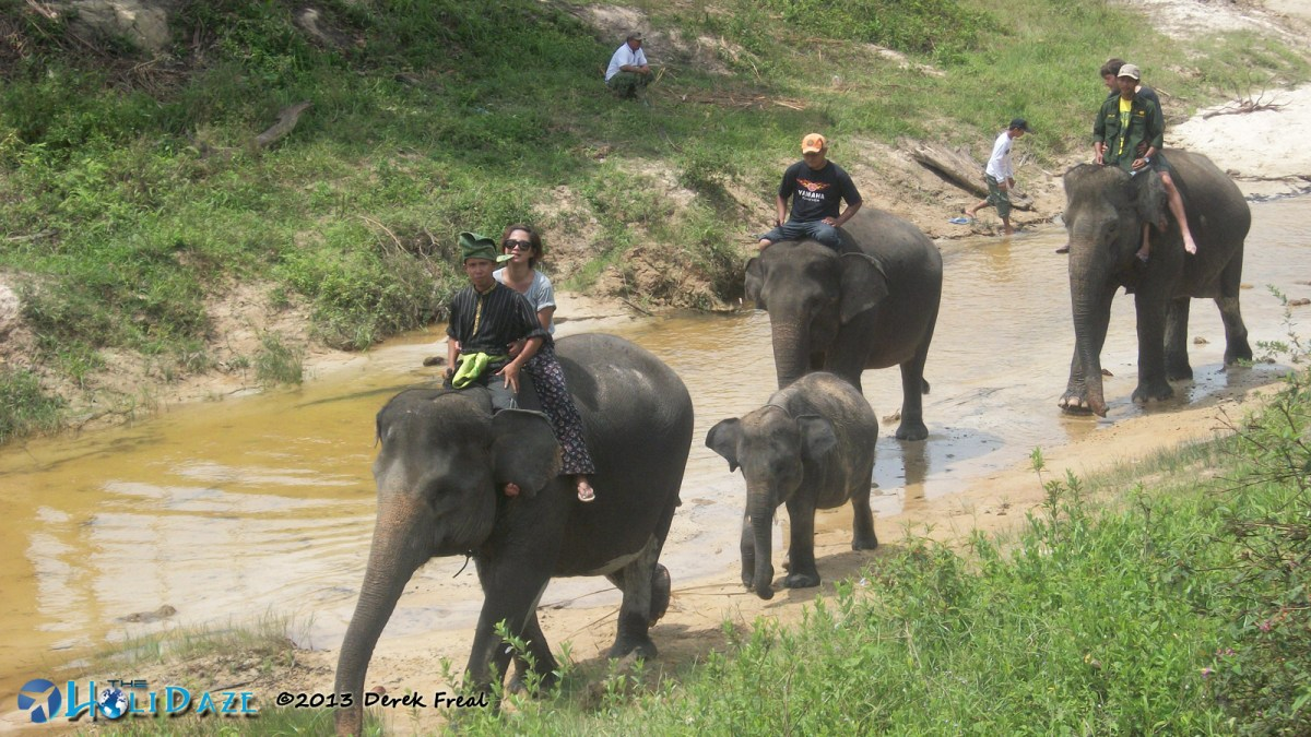 Elephant Sanctuary in Sumatra