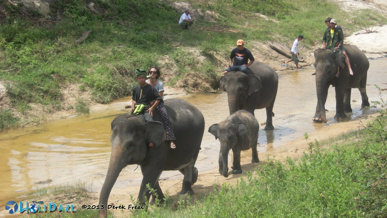 Elephant Sanctuary in Sumatra