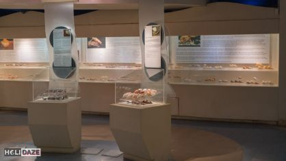 The Bangkok Seashell Museum is a great offbeat destination in Thailand's capital city