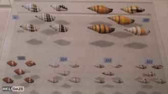 Hundreds of seashells at Bangkok Seashell Museum in Thailand