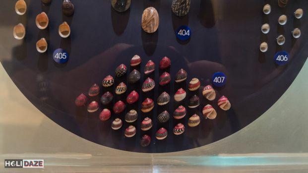 Exploring Bangkok Seashell Museum in Thailand