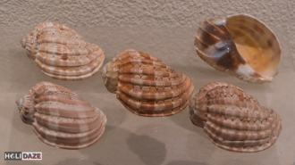 Exploring the offbeat side of Bangkok at the seashell museum