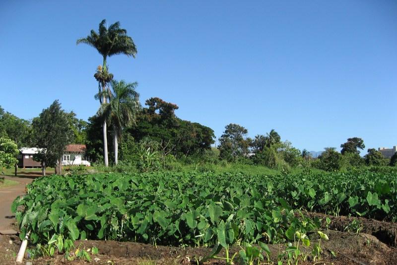 Hawaii Plantation Village