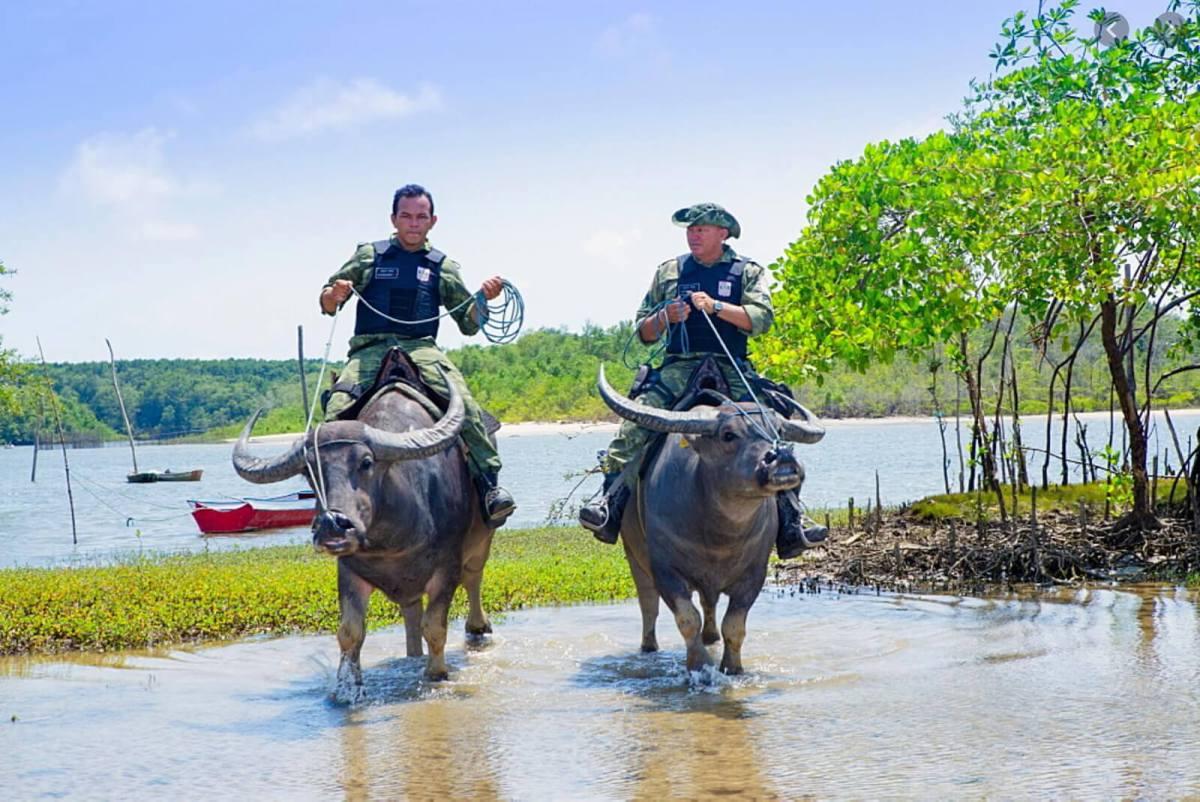 Police on Marajó island in Brazil use buffalo instead of vehicles
