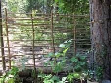 Hazelnut wattle fence