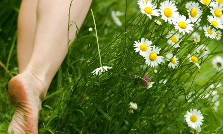 barefoot in the chamomile