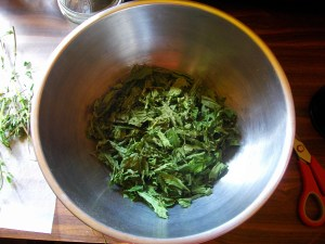 freshly dried nettle