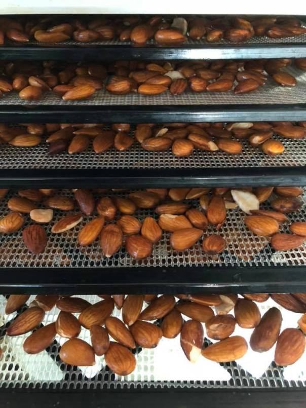 soaked almonds in a dehydrator
