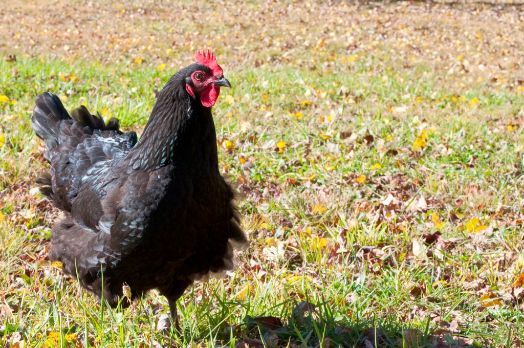 The Truth About Homesteading
