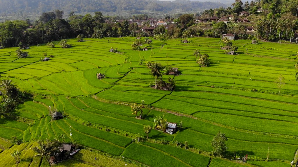 Sidemen Bali rice terraces