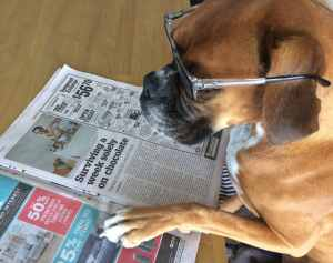 Bella reading the paper