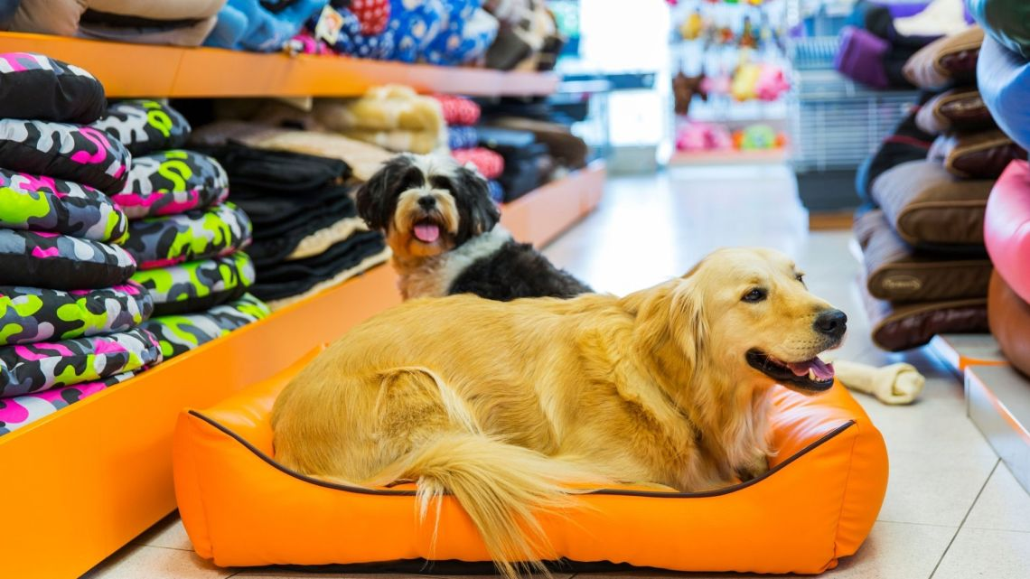 How to start your online pet store