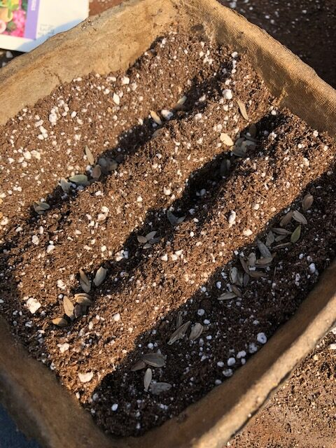 Seeds in a row small space seed starting