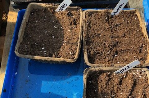 Cover seeds with soil and tamp down.