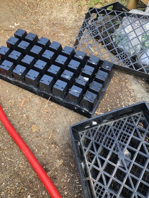 804 tray inserts 4-cell pack, daisy tray