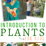 A Fun Hands On Introduction To Plants For Kids The Homeschool Resource Room