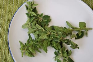oregano herbal treatment oregano essential oil