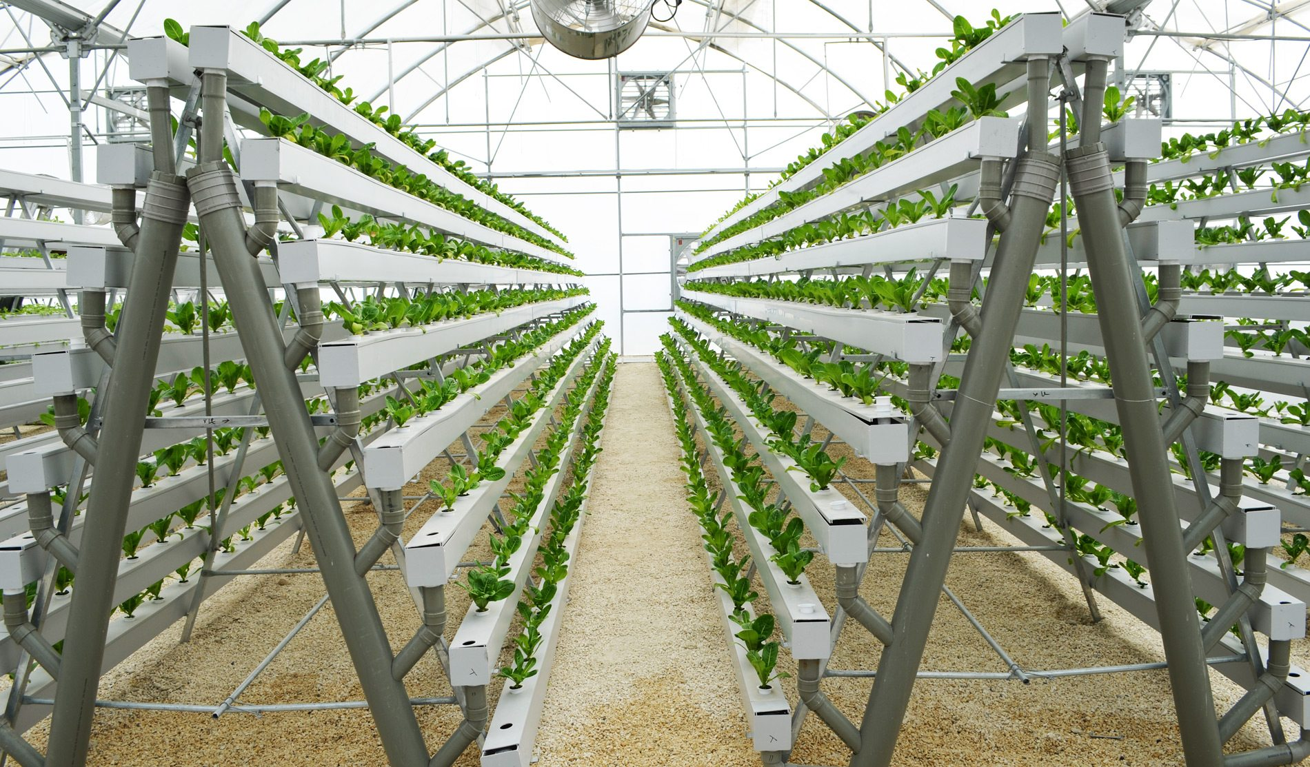 diy hydroponic a frame build grow 168 plants in a 6 x 10 on Commercial Hydroponic Systems Design id=55961
